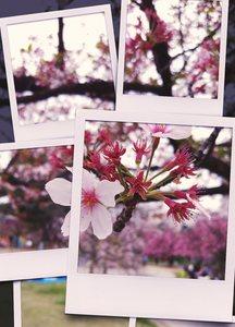 IMAG0033_1.jpg