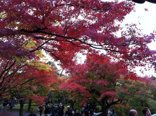 tofukuji2.jpg